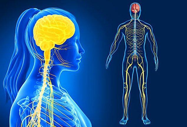 Kozmetik ürünlerdeki kurşun maddesi özellikle sinir sistemine zarar verebilir.