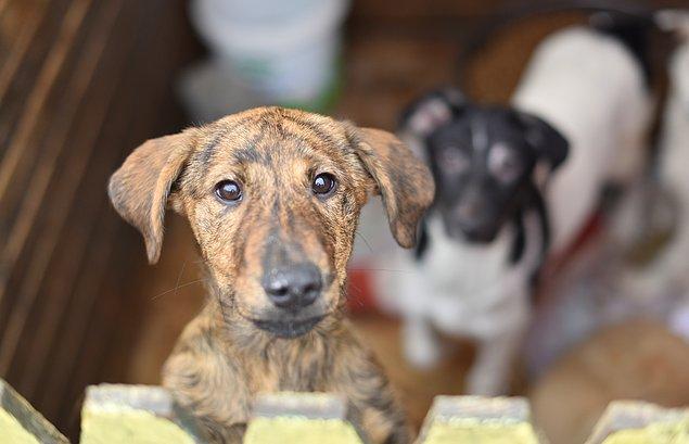 Evet. burası 3 binden fazla köpeğin barındığı, tedavi edildiği ve hayvan dostlarının yeni dostlar edindiği Yedikule Hayvan Barınağı.