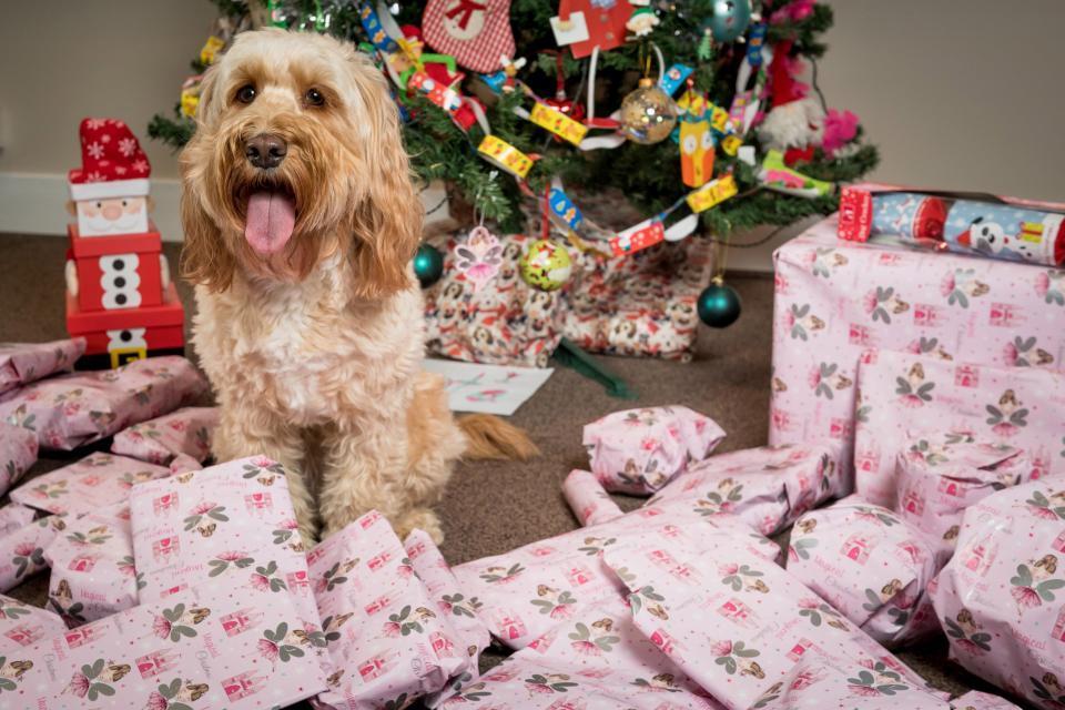 Eşi ve Oğlunun Gözü Yaşlı Köpeğinin Noel Hediyelerine 5000 TL Harcayan Kadın 22