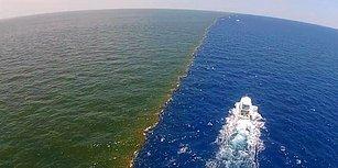 Mississippi Nehri'nin Meksika Körfeziyle Buluştuğu Yer: Ölü Bölge