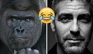 İnternet Dünyası Fotojeniklik Konusunda Çığır Açan Goril Shabani'yi George Clooney ile Kıyaslıyor!