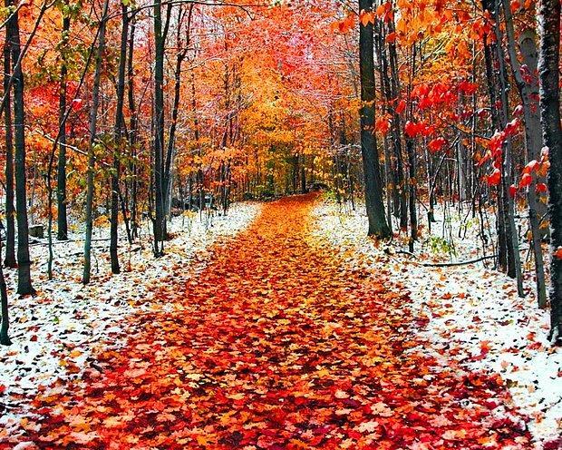 Kasım