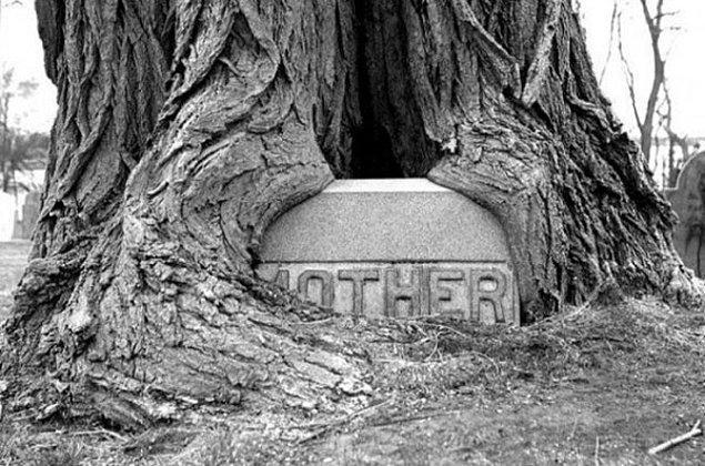 8. Massachusetts'de bir mezarlıkta, 'ANNE'nin mezarına sarılan ağaç.