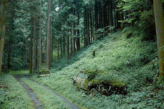 19. Japonya'da ormana terk edilmiş iki araç artık oranın sakini.