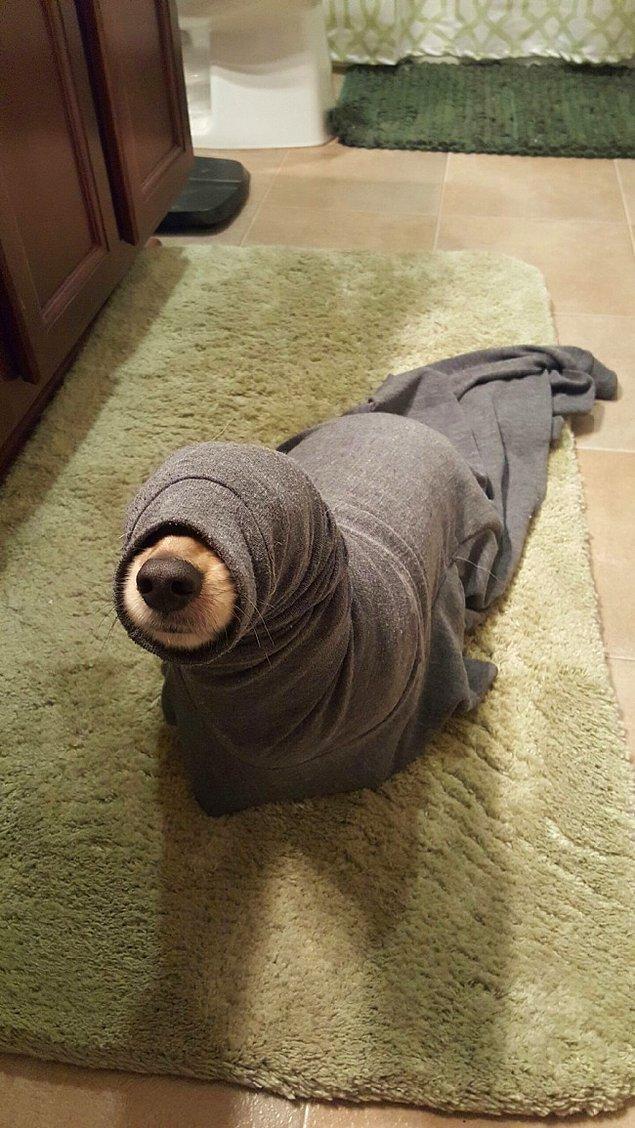 2. Kıyafetin kol kısmına sıkışmış bir köpek gördüğünüzü sandınız ama aslında evcil bir fok görüyorsunuz. 😜