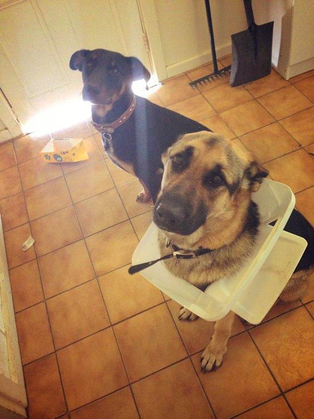 5. Ne? Birisi çöp kutusunu mu karıştırmış? Yok, biz bilmiyoruz. 😌