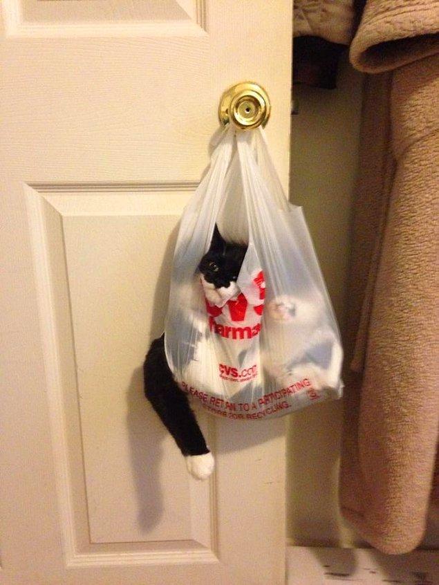 9. Eczanede kedi mi satılıyor? 😱