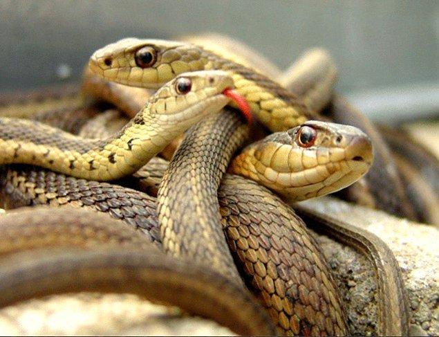 14. Ben de tam diyordum niye kimse yılan fotoğrafı atmamış bu soruya cevap olarak...