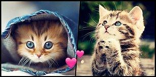 Sokaktan Kedi Sahiplenecekler Toplaşın! Bu Tavsiyeler Çok İşinize Yarayacak!
