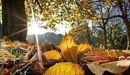 Sonbaharın Favori Mevsiminiz Olduğunu Gösteren 10 İşaret