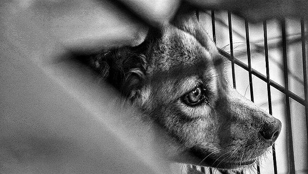 📌 Sahipli veya sahipsiz hayvana acımasız ve zalimce muamelede bulunan veya eziyet eden ya da haklı bir neden olmaksızın öldüren 4 aydan 3 yıla kadar hapis cezası verilecek.