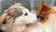 Yıllardır Beklenen Yasa Nihayet Geliyor! Hayvanlara Yönelik Şiddete Hapis Cezası Yolda