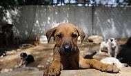 Yıllardır Beklenen Yasa Nihayet Geliyor mu? Hayvanlara Yönelik Şiddete Hapis Cezası Yolda