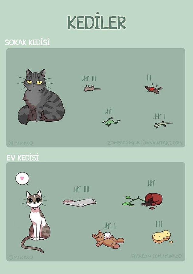 10. Elin kedisi bak neler yapıyor sen hala...