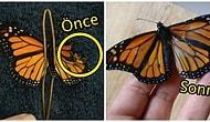 Güzel Şeyler de Oluyor! Yaralı Kelebeğin Kanadını İyileştirerek, Ömrünü Uzatan Kadın