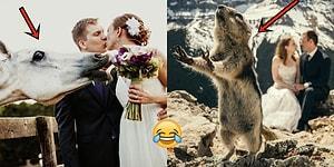 Kadraja Daldıkları Düğün Fotoğraflarının Parlayan Yıldızı Olmayı Başarmış 25 Minnoş