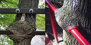Daha Neler! Yemek Yemeyi En Az Sizin Kadar Seven 17 Obur Ağaç