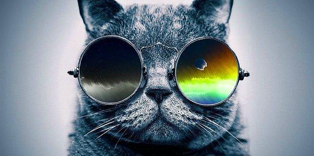 Aranan Cool!