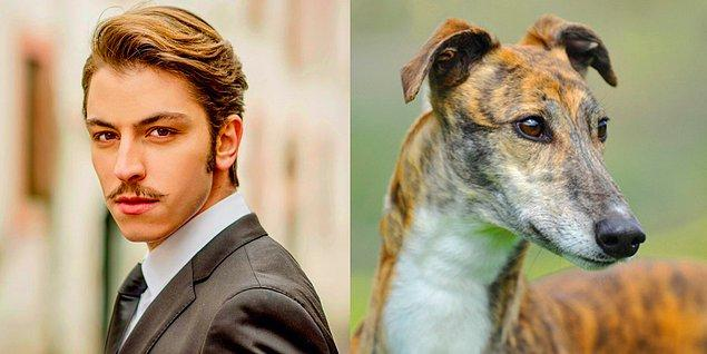 Leon, çoban köpeği!