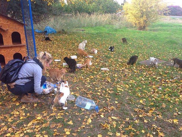 Besleme yaptıkları ve iyileştirdikleri hayvanlar genelde  oturdukları bölgede bulunuyor.