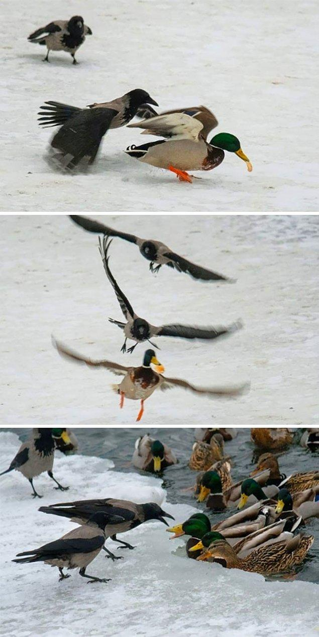 14. Lan ördek, hişşş ördek, kaçma lan, napcan dayına mı dövdürtcen, hişşşşt alo ördek!