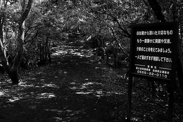 11. Aokigahara Ormanı - Japonya
