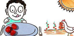 Yemek Yemeyi Bırakırsak Vücudumuzda Ne Gibi Değişiklikler Olur?