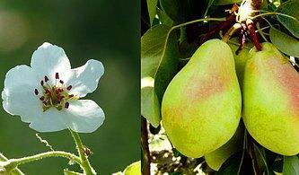 15 Meyve ve Sebzenin Sizi Kendine Hayran Bırakacak Güzellikteki Çiçekleri