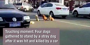 Hayatını Kaybeden Dostlarının Başından Ayrılmayan Köpeklerin Gözleri Yaşartan Görüntüleri