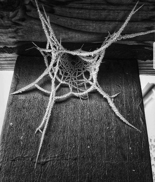 7. Evinizin bir bölümünü aylar boyunca kontrol etmediniz, sonuç bu örümcek ağı. Ne yapardınız?