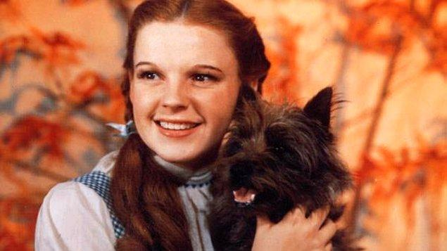 12. Oz Büyücüsü filmindeki köpek, filmdeki pek çok oyuncudan daha yüksek bir ücret karşılığında filmde yer almış. (125 dolar)