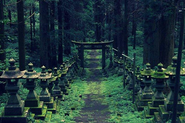 15. Nüfus yoğunluğu çok yüksek olmasına rağmen Japonya gelişmiş ülkeler içinde en yüksek ormanlık alana sahip ülke (%74).