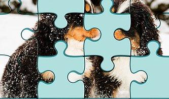 Bu 12 Parçalık Minnoş Puzzle'ı Tamamlayabilecek misin?