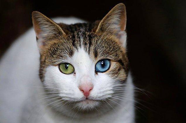 Uluslararası haber ajansı Reuters, İstanbul'un kedilerini fotoğrafladı.