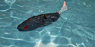 Fırat Üniversitesi'nde Geliştirilen Akıllı Robot Balık