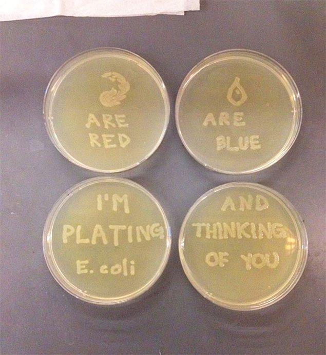 """2. """"Kız arkadaşım mikrobiyolog. Az önce bu hediyeyi gönderdi."""""""