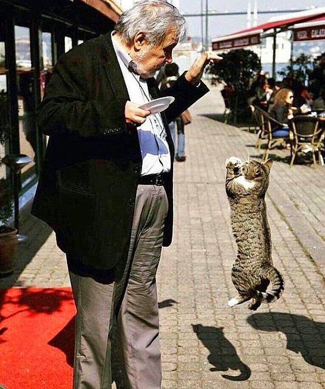 5. Ne kadar kültürlü bir kedi