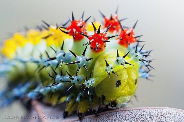 Birbirinden küçük ve estetik olan bu hayvanları tüm detayları ile yakalıyor olması göz alıcı!