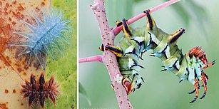 Bilim İnsanı ve Fotoğraf Sanatçısı Igor Siwanowicz'in Objektifinden Renkli ve Estetik Tırtıllar!