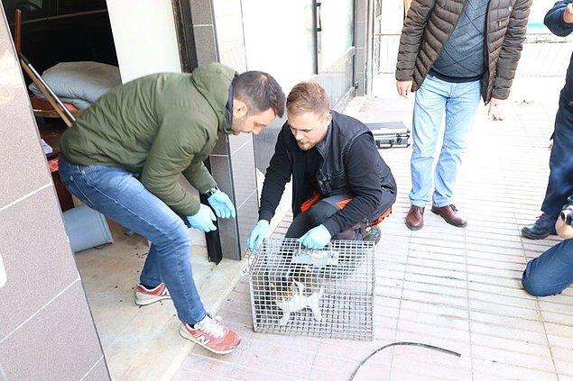 Kedinin, sağlık kontrollerinin ardından doğal ortamına bırakılacağı öğrenildi.