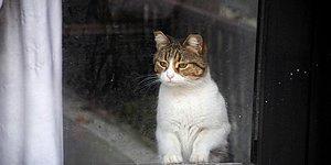 'Savcı Talimatıyla' Serbest: Yalova'da Bir Dükkanda 20 Gün Mahsur Kalan Kedi Özgürlüğüne Kavuştu