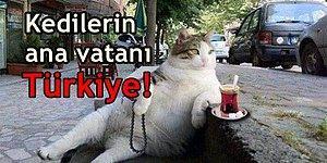 Anadolu'dan Vikinglere! İşte Kedilerin Dünyayı Fethetme Öyküsü
