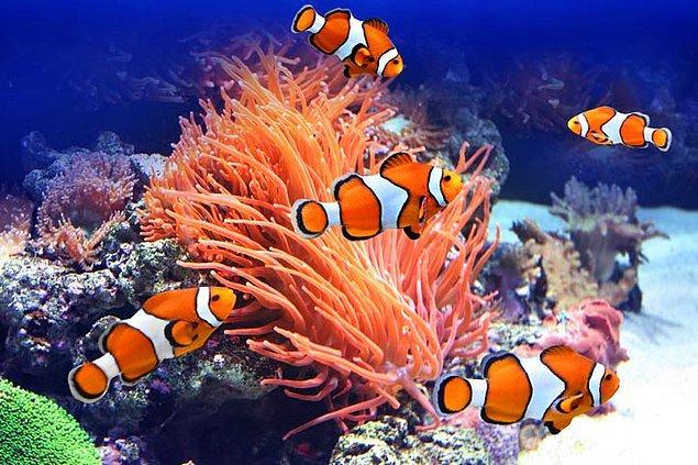 12. Kayıp Balık Nemo hikayesi gerçekte olsaydı durum biraz farklı gelişebilirdi!