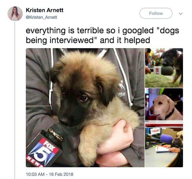 7. Her şey boktan, ben de gidip 'röportaj veren köpekler'i googleladım ve işe yaradı.