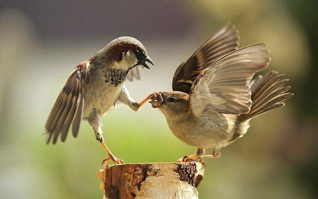 """5. """"Tamam şimdi sen bi' sus artık ben konuşayım!"""""""