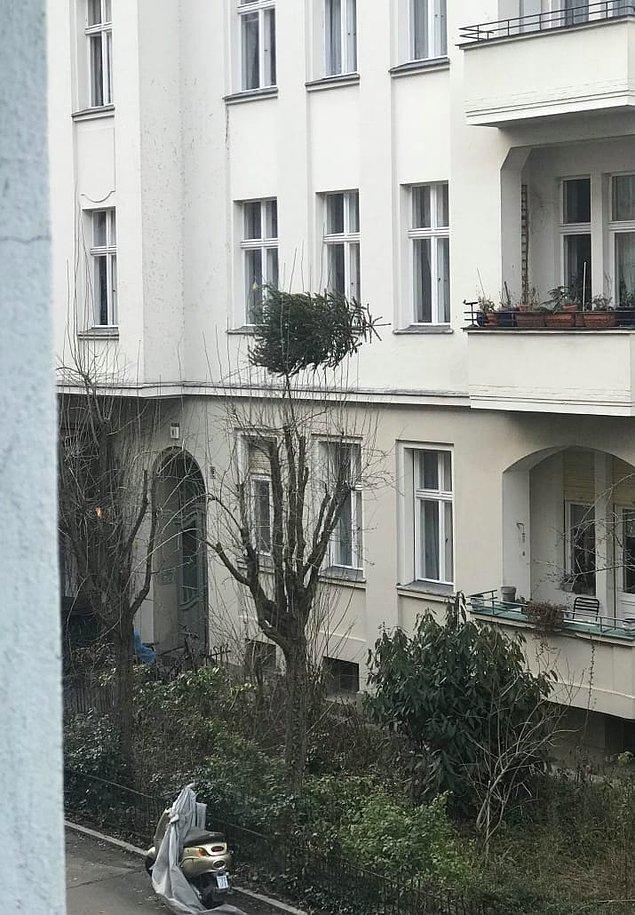 9. Yılbaşı ağaçlarını işiniz bitince camdan aşağı atmamak için güzel bir sebep 🤔