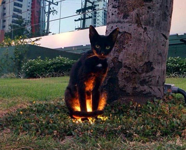 Bu kedi bariz bir şekilde görmemiz için ışıklandırılmış. Kesinlikle bir yan görev içeriyor olmalı.
