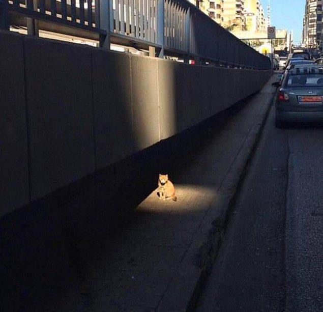 Bir başka yan görev içeren kedi. Yine fark edebilmemiz için ışıklandırılmış.