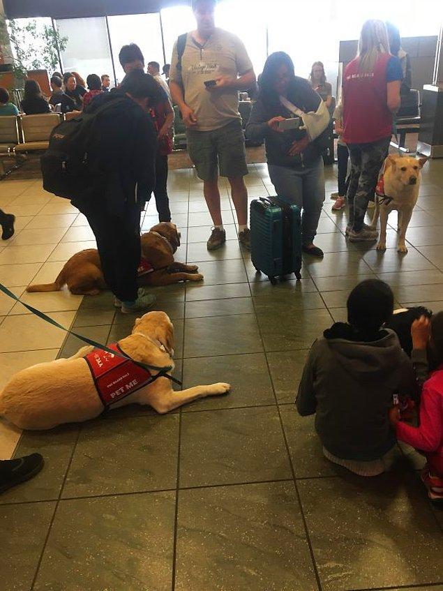 3. Uçuştan önce sakinleşmek isteyenler için hazırda bekleyen rehber köpekler 👇