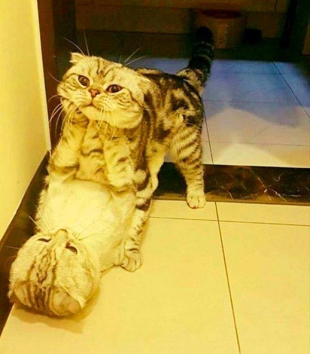 13. Yeterince dikkatli bakarsanız, bugün olduğu yere nasıl geldiğini düşünen dalgın bir kedi göreceksiniz.